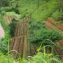 مزارع قهوه در ویتنام - ویکیپدیا
