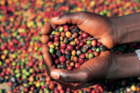 Zombo-coffee-farmers
