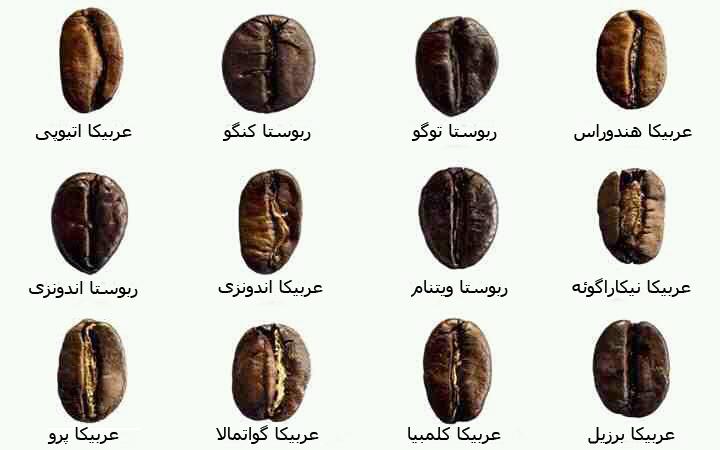تصویری از انواع دانههای قهوه ~ رسانه قهوه و کافه ایران ~ آیکافی ...