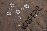 iCoff.ee | آیکافی در ساحل