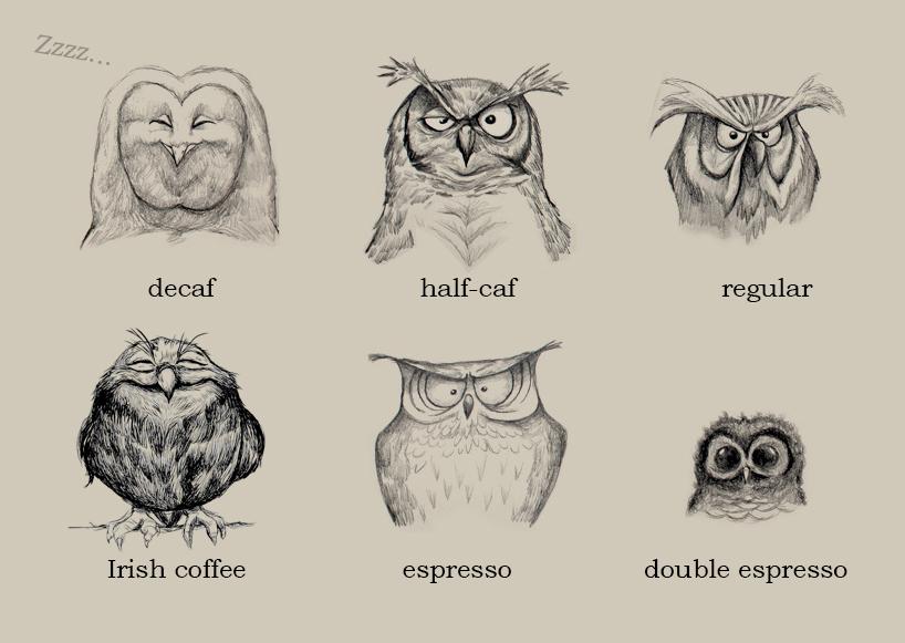 قهوه صبحگاهی خانواده جغدها