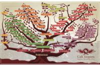 نمودار درختی زیرگونههای قهوه
