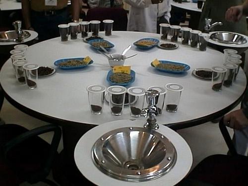 Coffee Cupping Table ~ میز کافی کاپینگ