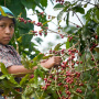 Mexican Coffee Industry
