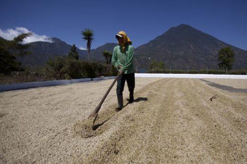 قهوه گواتمالا