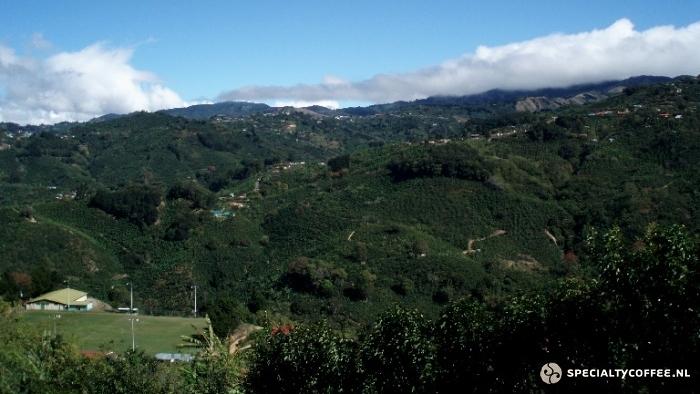۱٫ Panama Coffee قهوه پاناما