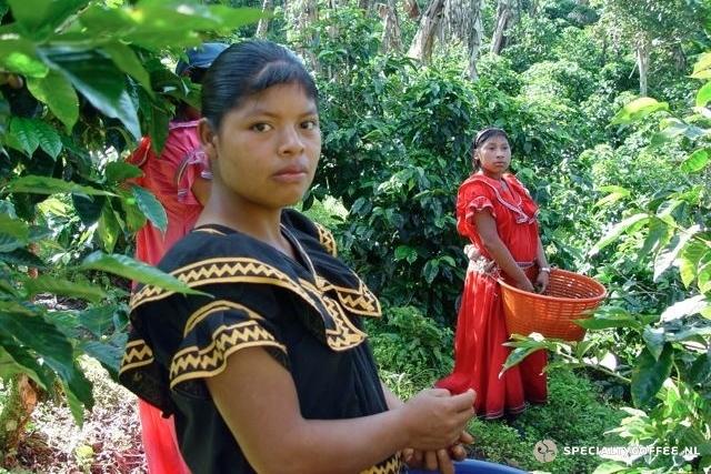 ۲٫ Panama TN Coffee قهوه پاناما