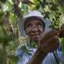 قهوه هاییتی