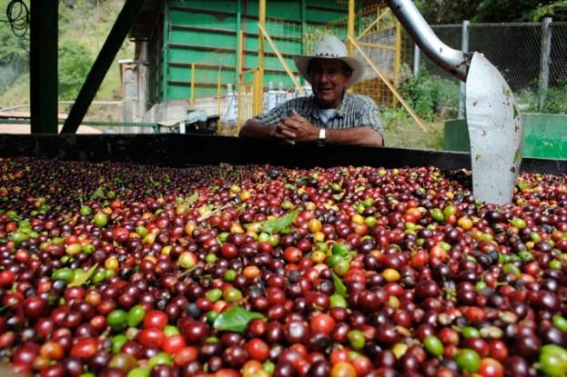 قهوه کاستاریکا