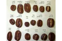 coffee-beans-shape-شکل-انواع-دانههای-قهوه-rs