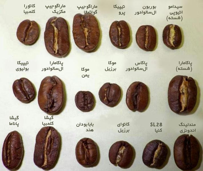 شکل دانه قهوه