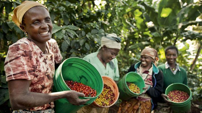 کارگران مزرعه قهوه در تانزانیا