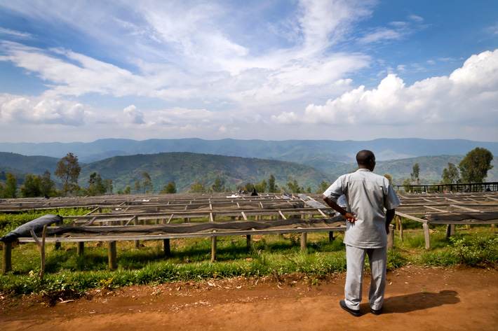 مزرعه قهوه رواندا