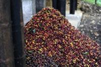 Columbia-Coffee-قهوه-کلمبیا۱-۵۰۰-۶۴