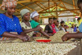 قهوه کنگو قهوه آفریقا