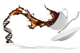 قهوه و ژنتیک قهوه ایران آیکافی