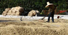 قهوه دومین کالای جهانی نیست