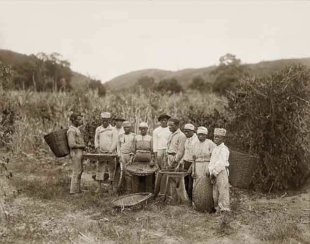 بردهداری و قهوه