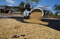 TechnoServe coffee drying South Sudan