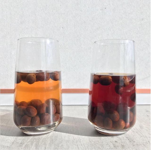 ساشا سستیک تخمیر قهوه