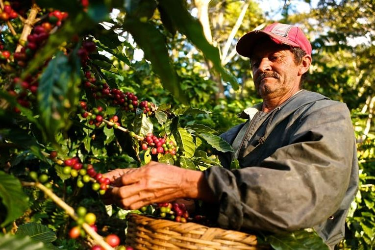 کشاورزان قهوه