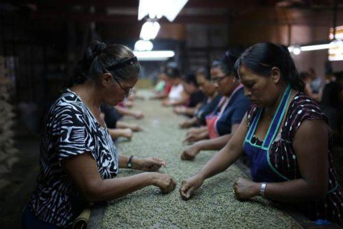 قهوهی السالوادور