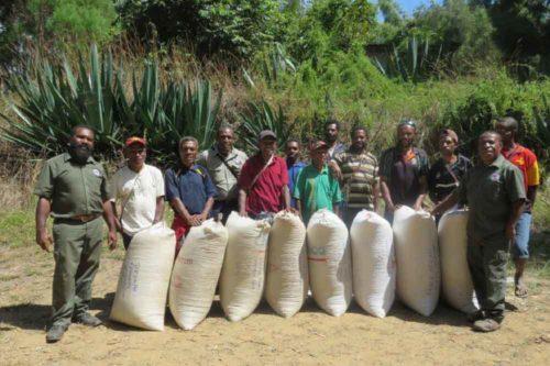 قهوه گینه نو