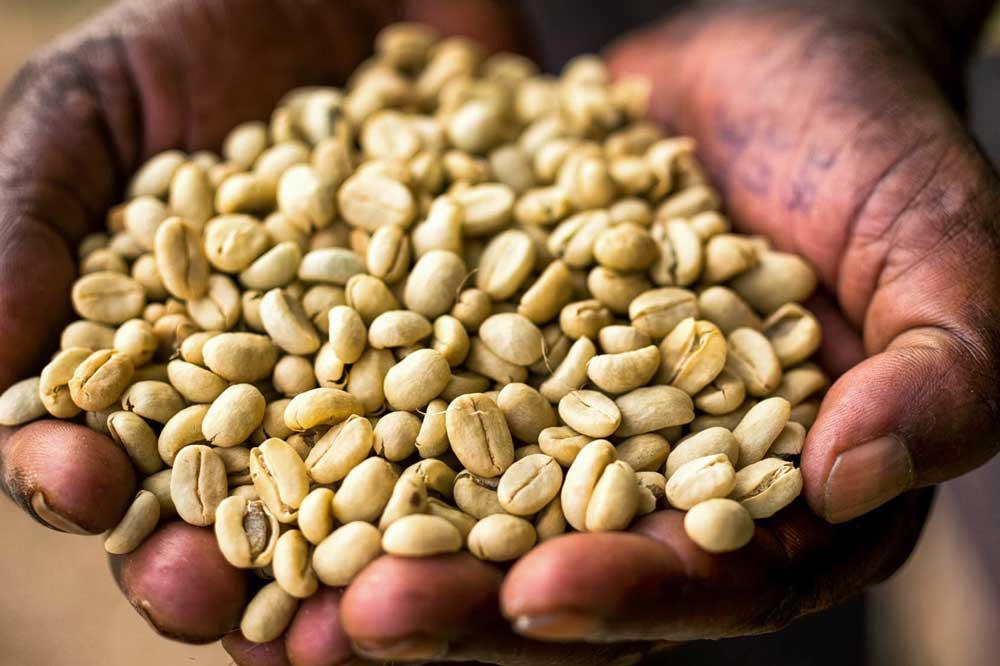 قهوه  اتیوپی,