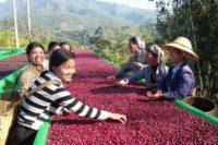 قهوه برمه