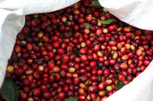 کاهش قیمت جهانی قهوه