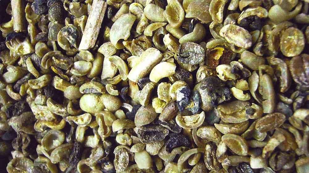 عیوب قهوه سبز: دانه سیاه، تخمیری و شکسته