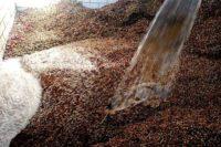 فرآوری خیس یا شسته قهوه