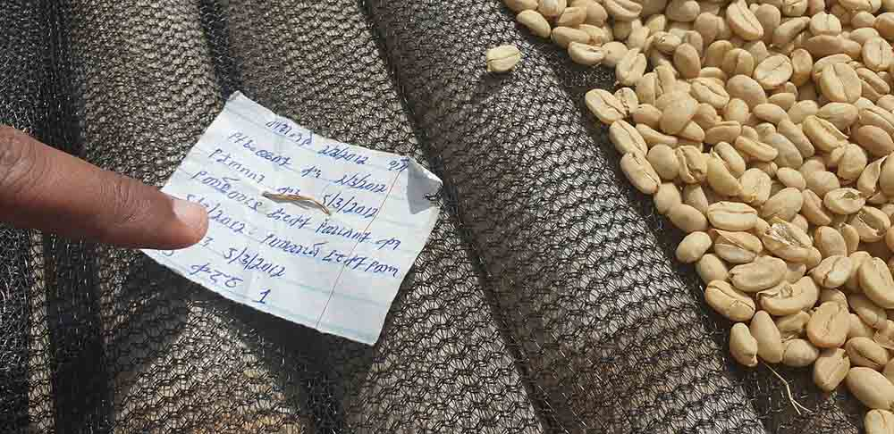 سفرنامه قهوه اتیوپی