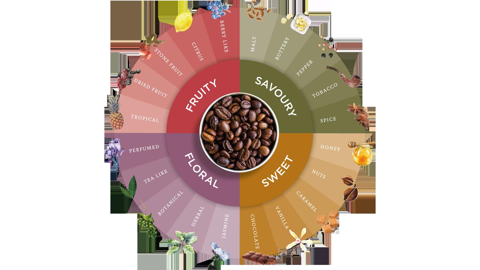 چرخه طعمی قهوه