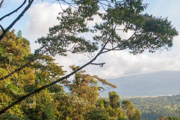 تفاله قهوه راهکاری برای احیای جنگلها و مقابله با گرمایش زمین
