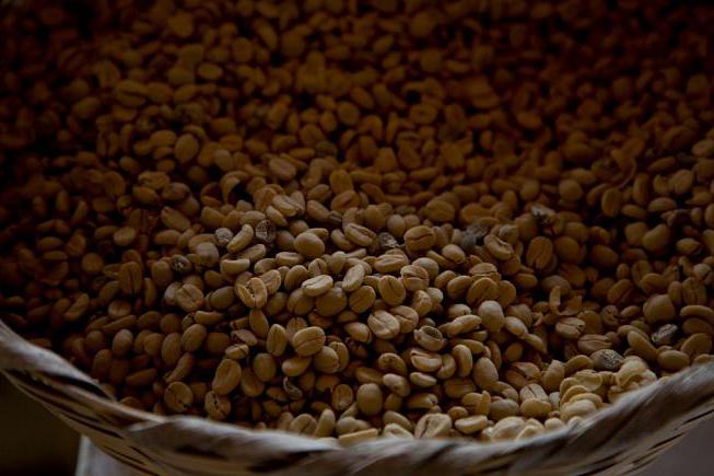 بیسابقهترین خشکسالی در صد سال اخیر در برزیل قیمت قهوه را بالا میبرد
