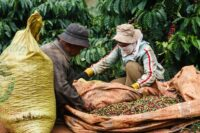 قهوه ویتنام
